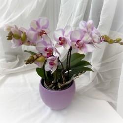 Boquetto Orkidea